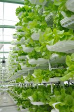 The Future of Vertical and Indoor Farming
