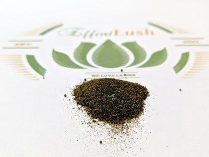 Effortlush-Green-Balance