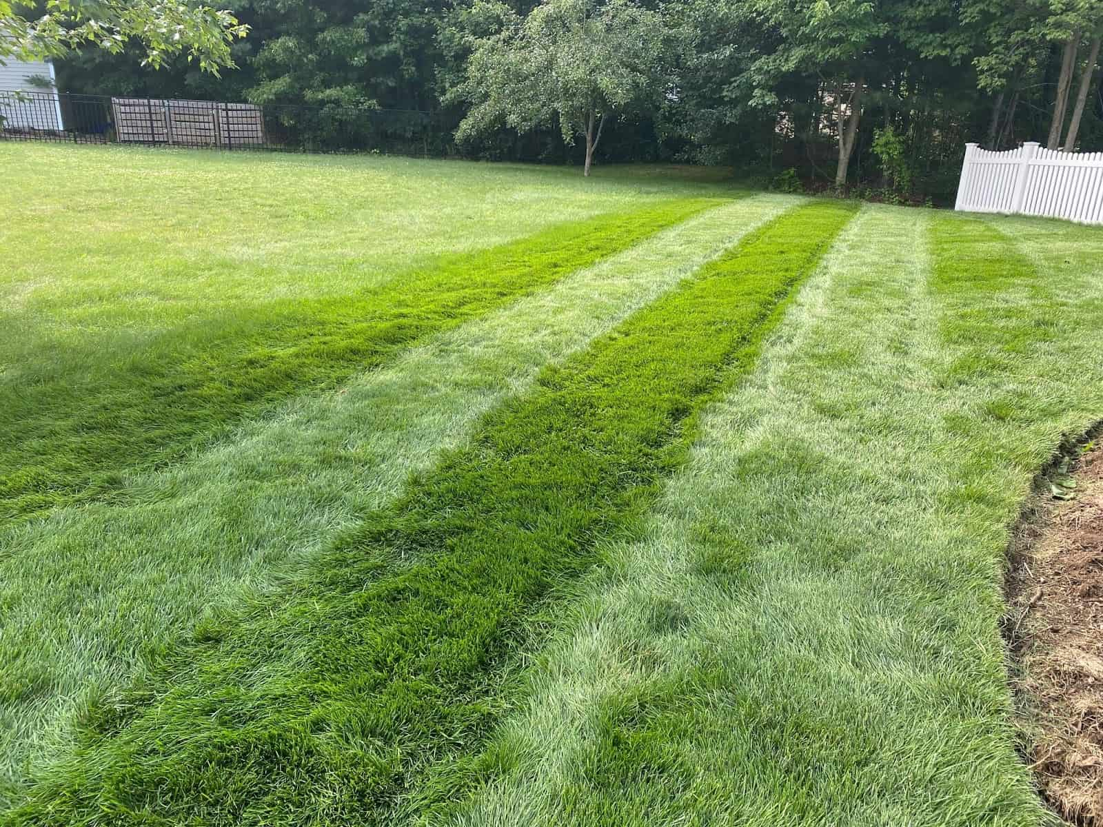 Stress Free Lawn in Summer